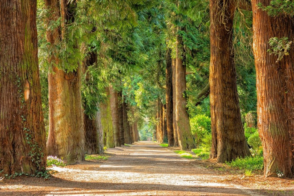 avenue, trees, tree lined-2215317.jpg